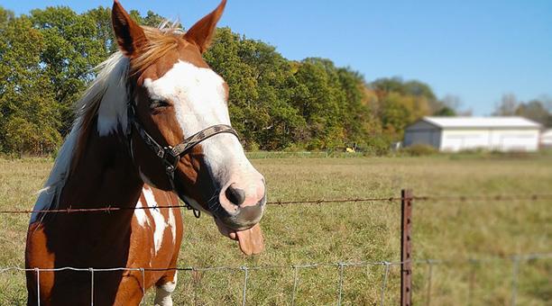 Wenn Pferde kotzen
